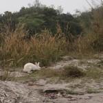 Suivez le lapin blanc...