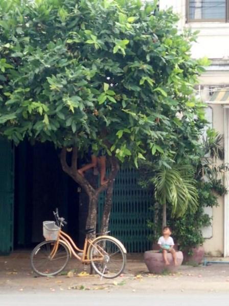 Regardez les jambes qui dépassent de l'arbre :)