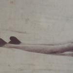 Parmi les derniers dauphins d'eau douce de la planète, dauphins irrawady