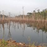 Etrange forêt immergée