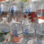 Magasin de poisson sur fish street