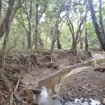 Trek sur Rinca Island