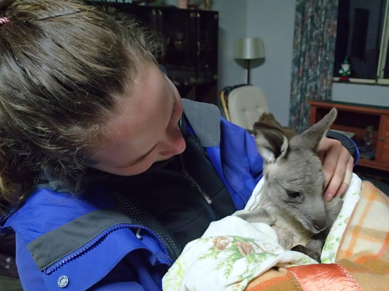 Pearl le bébé Kangourou