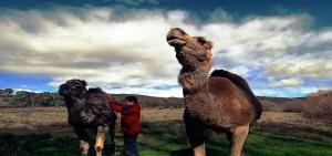 PHOTOS : AUSTRALIE (SYDNEY & FERME DE DROMADAIRES)