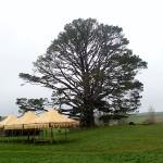 Party Tree