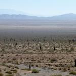 Désert de cactus