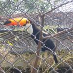 Visite au zoo de Santa Cruz