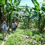 Arrivée dans une plantation de fruits