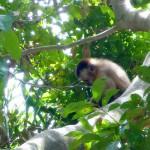 Petit singe perché dans les arbres de notre lodge