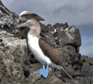 ARTICLE : ILES GALAPAGOS