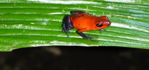 PHOTOS : COSTA RICA (Côte Pacifique et Fortuna)